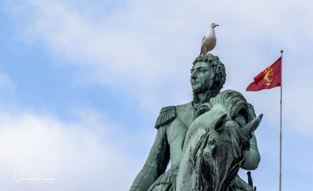 Gull sitting on horseman statue in state palace, Oslo, Norway